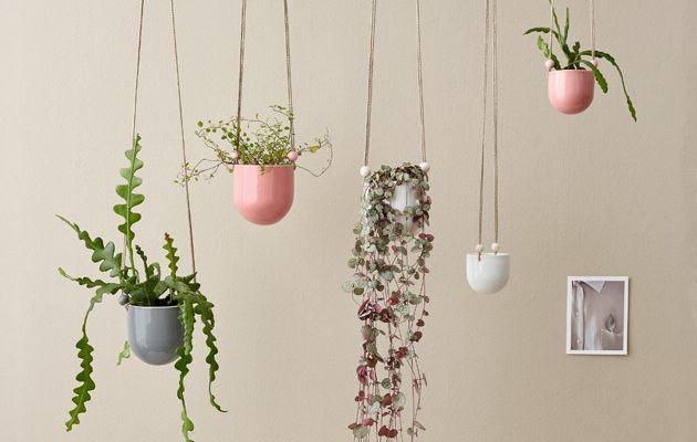 Trendikkäillä viherkasveilla tuot kotiin helposti uutta ilmettä. Panosta yhteen isoon tai monen pienemmän kasvin näyttävään ryhmään.