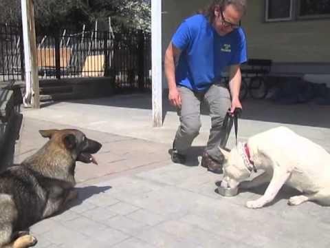 Food Aggression Resource Guarding Solid K9 Training Dog Training