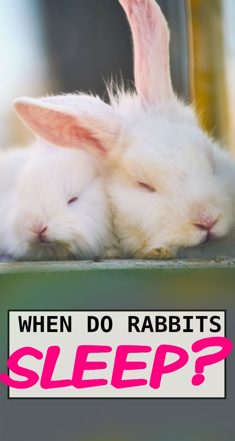 Rabbits Are Not Nocturnal So What Are They In 2020 Do Rabbits Sleep Pet Rabbit Rabbit