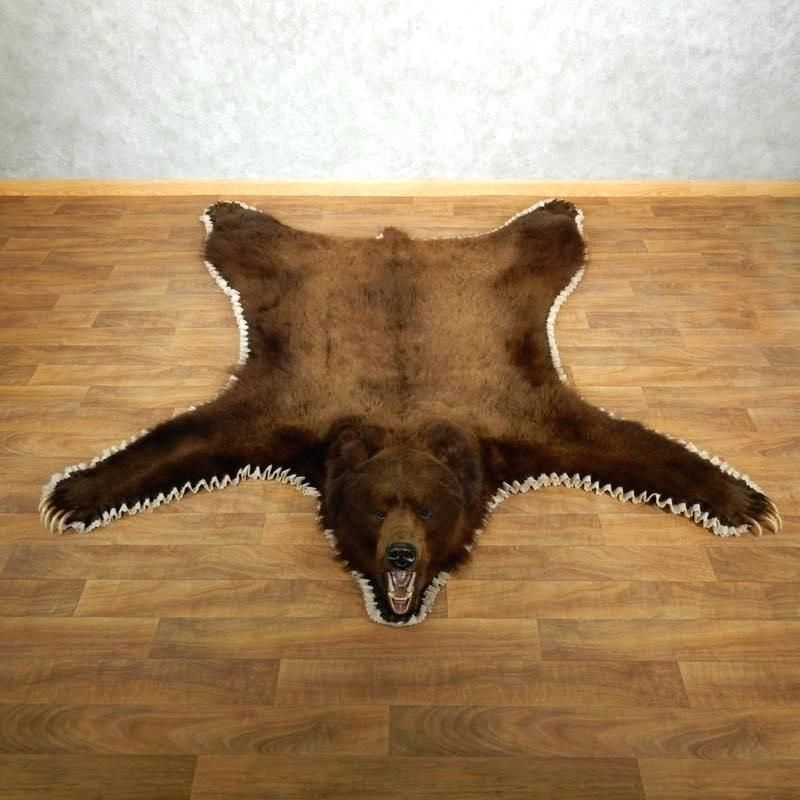 Bear Rug Taxidermy In 2020