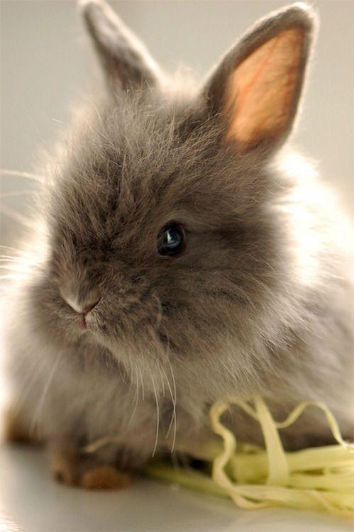 Cute Brown Rabbits
