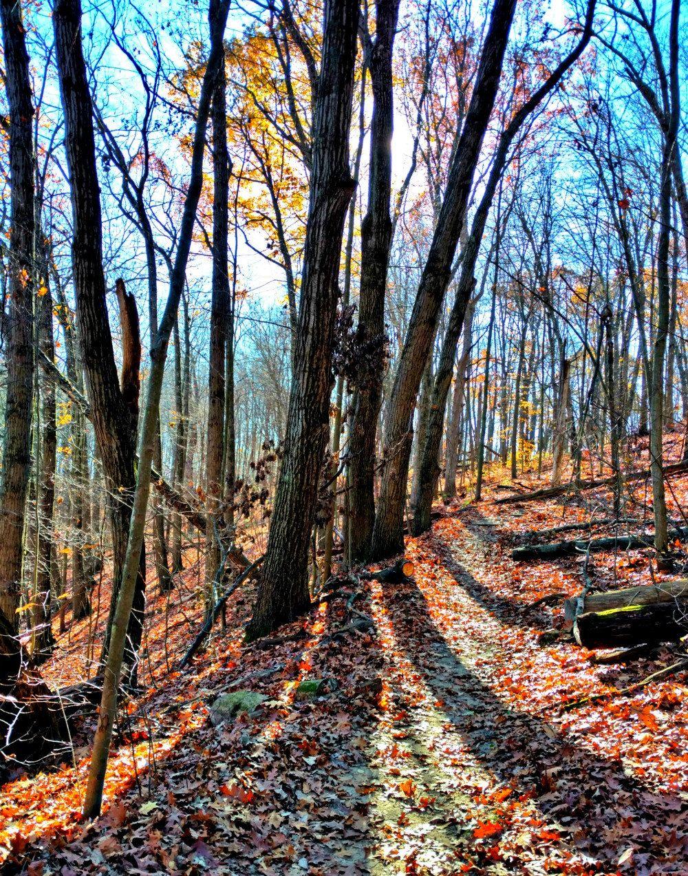 This Item Is Unavailable Landscape Autumn Landscape Autumn Trees