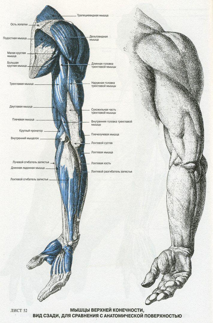 Сохранённые фотографии | 122 фотографии | Anatomy | Pinterest ...