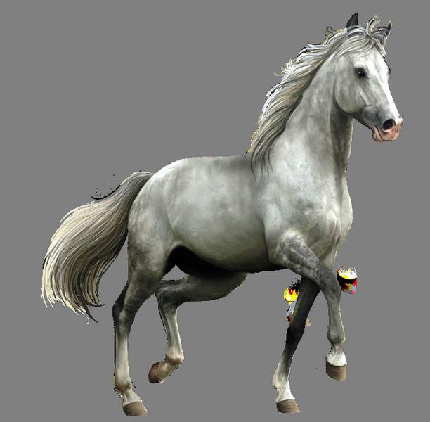 прозрачные картинки лошадей