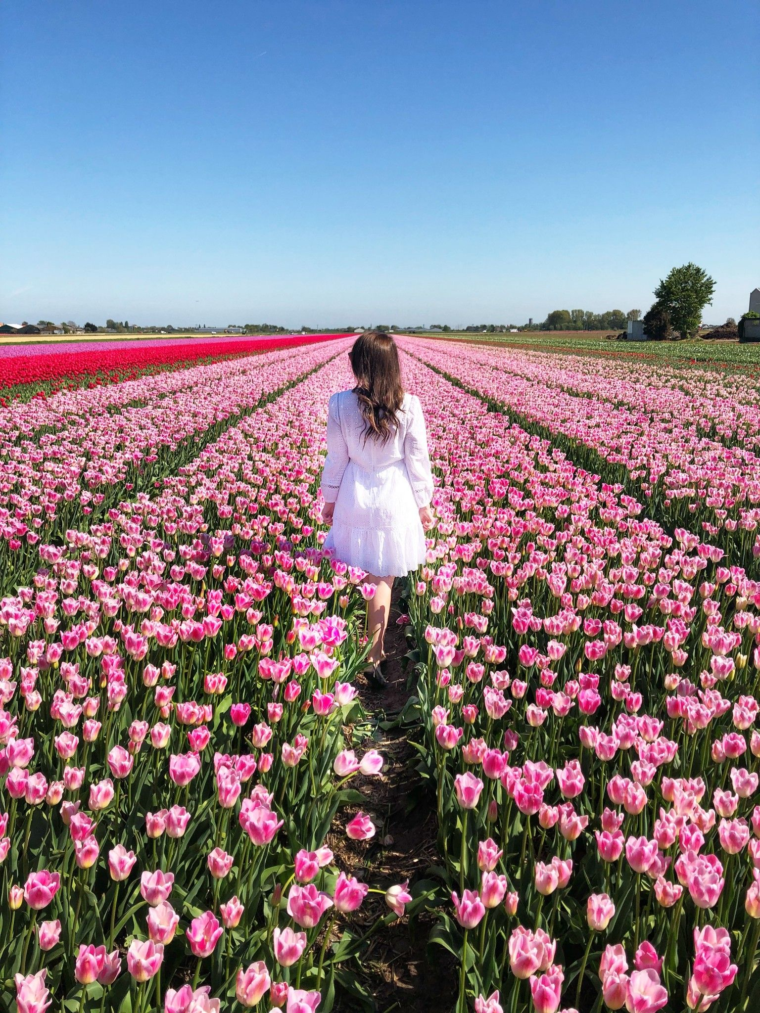 Travel Spotlight Visiting The Tulip Fields In The Netherlands