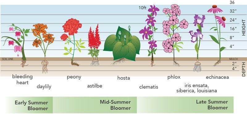 Bloom Time Spring Flowering Bulbs Longfield Gardens Landscaping Plants