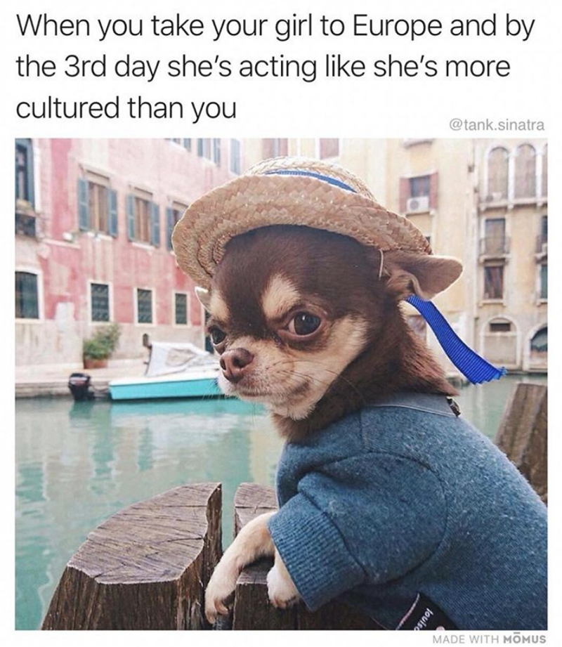 New Hilariously Funny Dog Memes to 2020 Funny