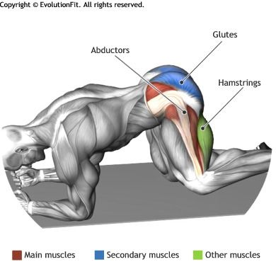 ABDUCTORES - Levantamiento cadera de rodillas   Anatomia   Pinterest ...