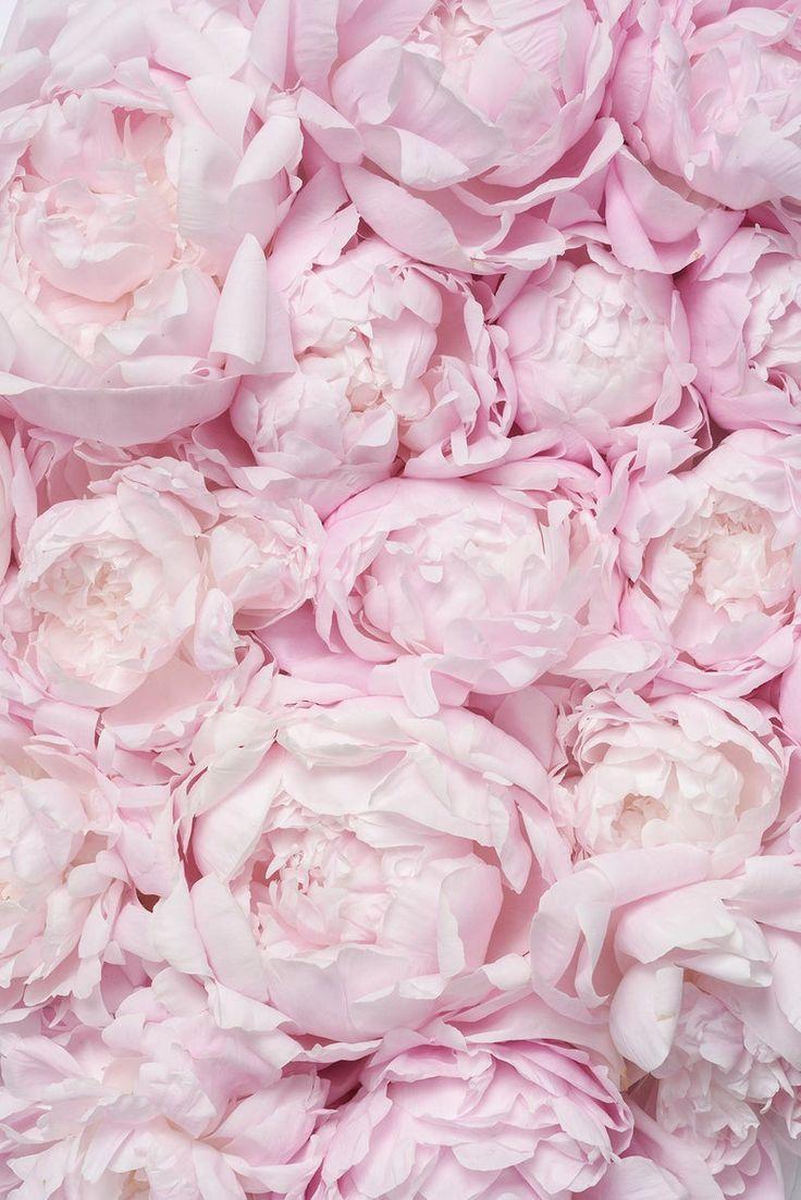 Blush Pink Silk Crepe Back Satin