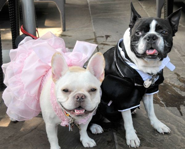 Good To Know Celebrate W Your Pets We Are Pet Friendly Hotel Frifotos By Fsmarunouchi Pets Pet Friendly Hotels Your Pet