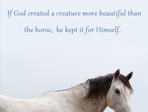 Horse Quote. Beautiful Horse.