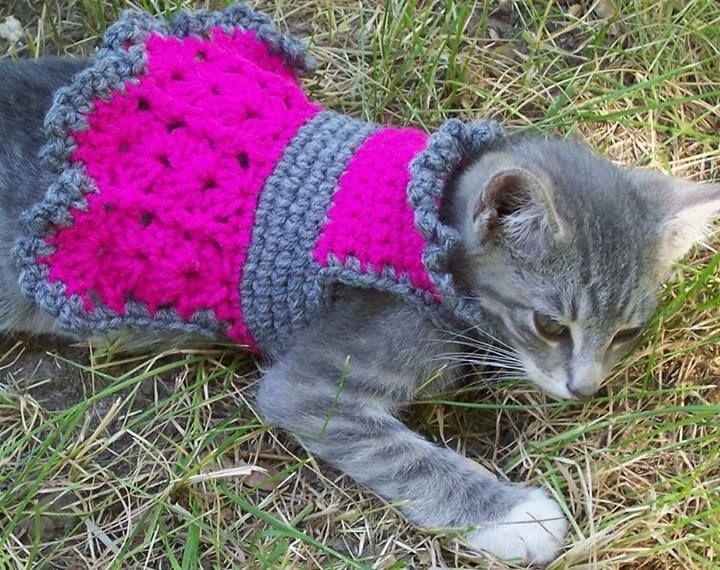 Pin by rphillips rmpbklyn on crafty ideas Crochet dog