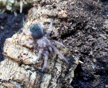 Pin von Joey auf spiders in 2020 (mit Bildern