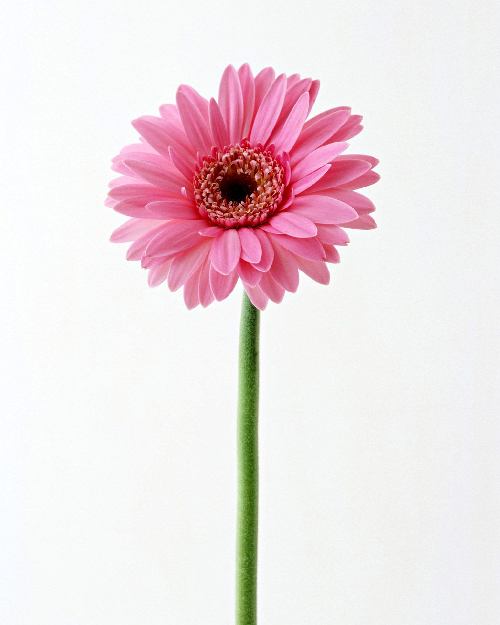 15 Vertical Flower Wallpapers