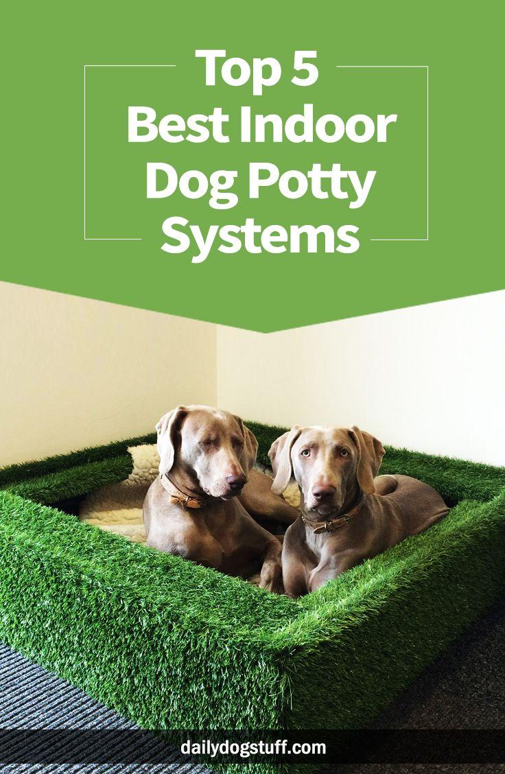 Top 5 Best Indoor Dog Potty Systems Dog potty, Indoor