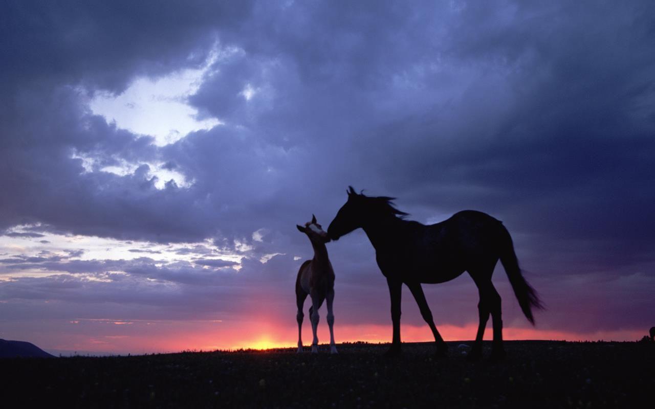 Top Wallpaper Horse Sunrise - 71fcb5fceb8e9cf80a1a98d67605e70d  Perfect Image Reference_295434.jpg