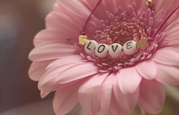 Pin Von Hanin Auf Liebe Amp Beziehung Valentinstag Blumen