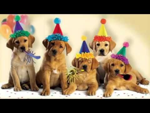 Cute Dogs Bark The Happy Birthday Song Mp4 Youtube Happy Birthday Dog Happy Birthday Cat Birthday Songs