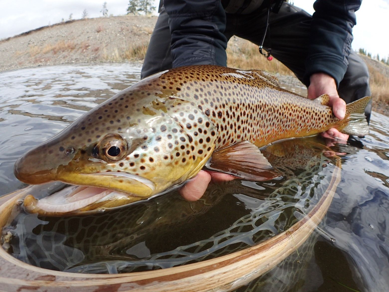 A Fly Fishing High On Montana S Pristine Gallatin River Gallatin River Fly Fishing Fish