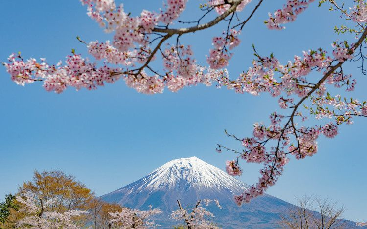 Japan S Famed Cherry Blossoms Are Already Blooming 6 Months Ahead Of Schedule Travel Leisure Cherry Blossom Japan Japan Tourist Japan Beach