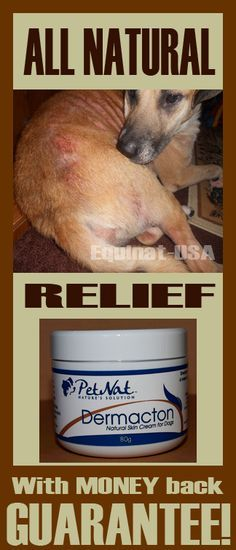 Steroid treatment for dog allergies statistics for steroid use