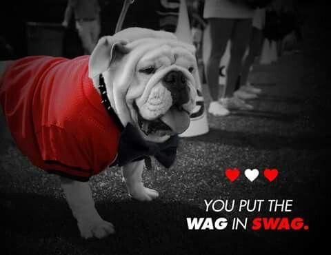 Go Dawgs Georgia Dawgs Georgia Bulldogs Bulldog Funny