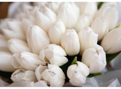 ورود بيضاء White Tulips Tulips White Flowers