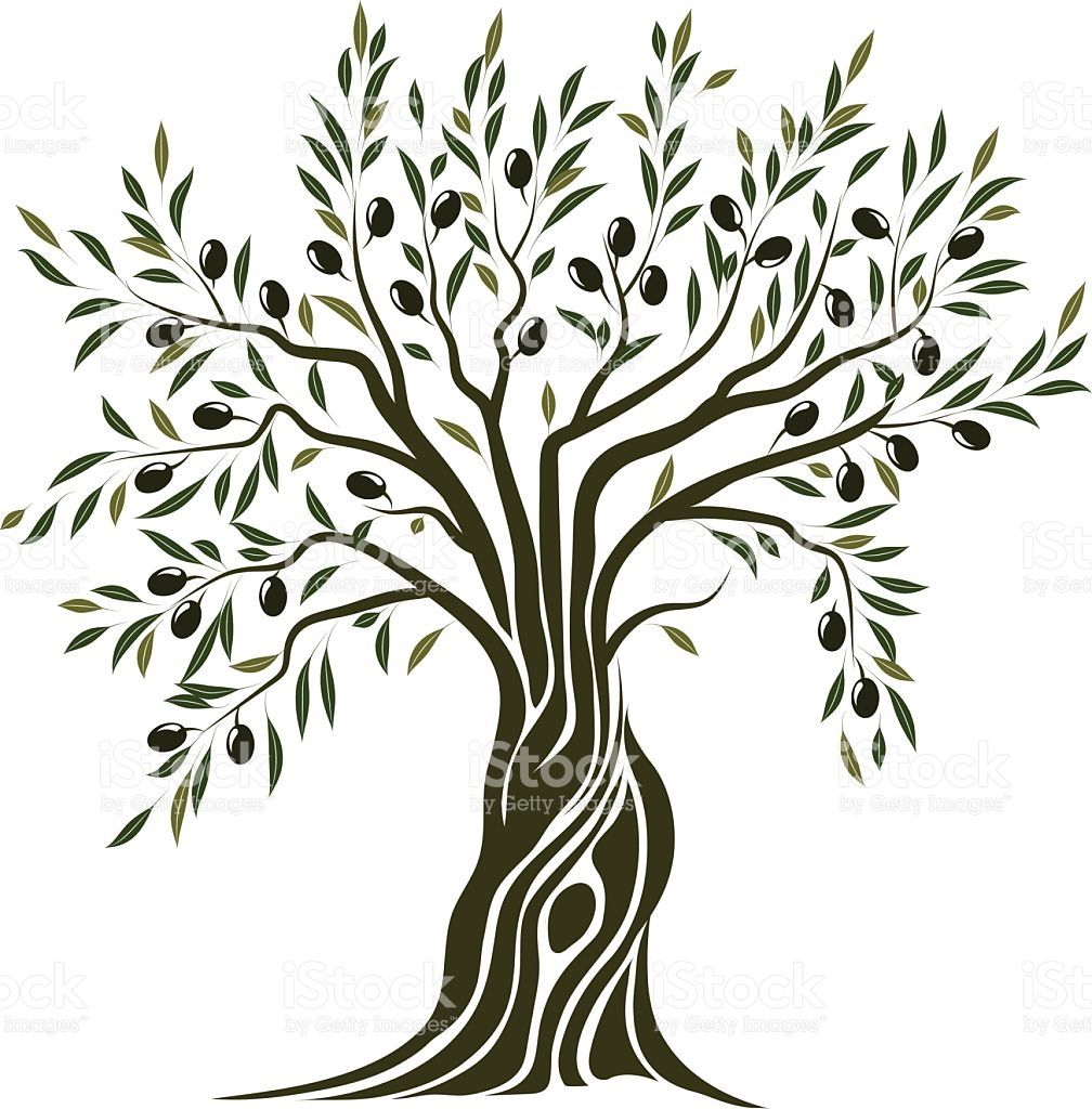 Olive Tree Tree Illustration Olive Tree Painting Tree Artwork