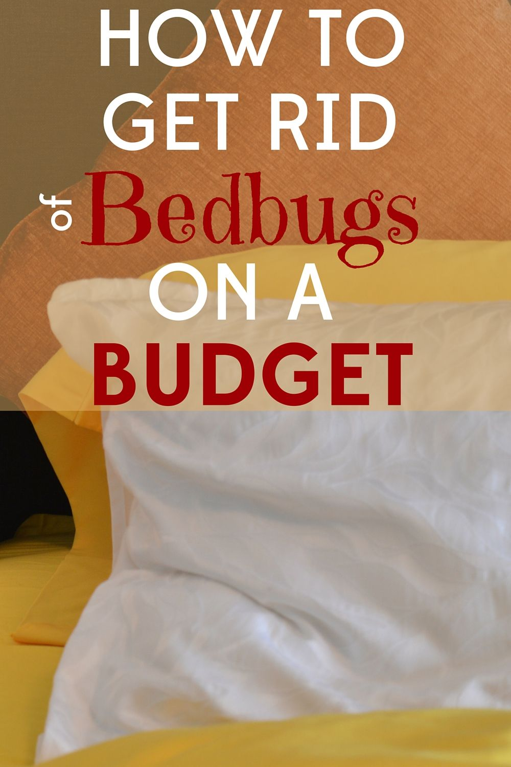 Getting Rid Of Bedbugs On A Budget With Images Bed Bugs Budgeting Bed Bug Remedies