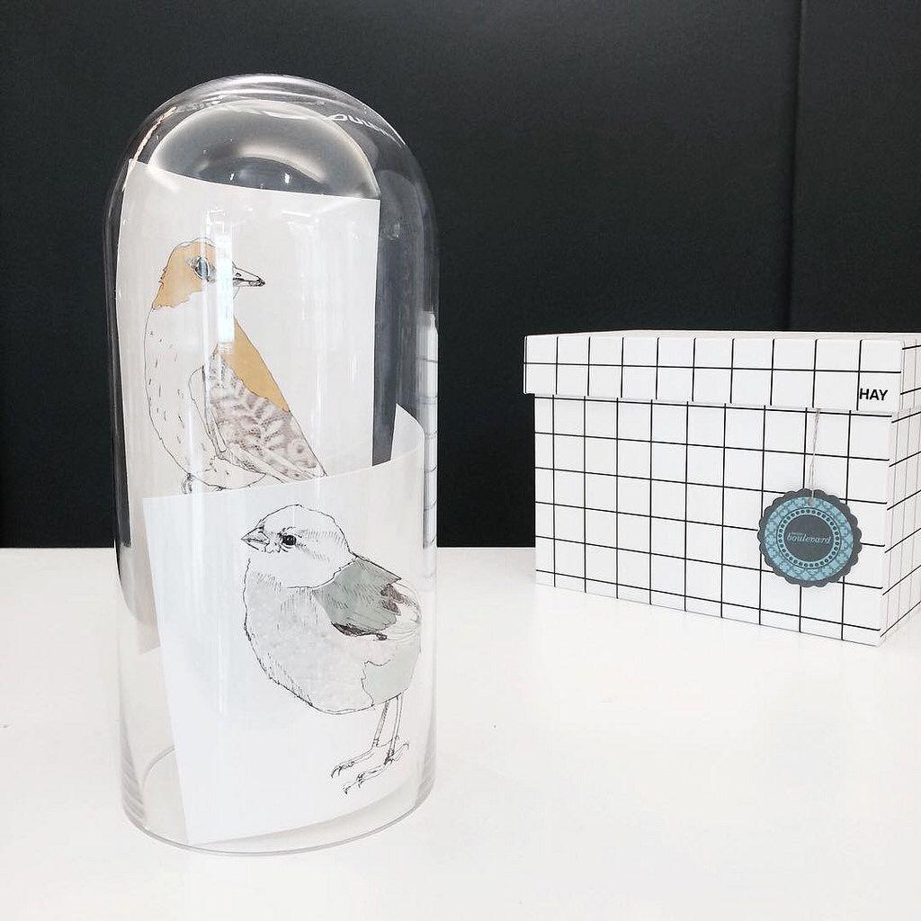 Lasikupu valokuvakesyksenä!  #lasikupu #glassdome #dome #kehys #kortti #maartjevandennoort @maartjevandennoort #designboulevard #boxbox