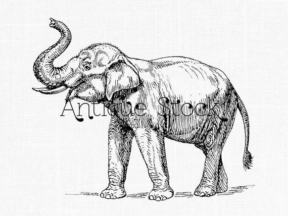 Line Art Drawing Elephant Png Jpeg Images Etsy In 2020 Elephant Line Drawing Line Art Drawings Art ✓ free for commercial use ✓ high quality images. pinterest