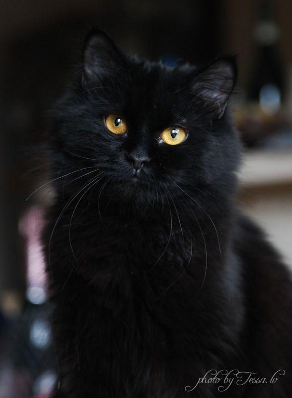 Чёрные котята » пользователя Ирина
