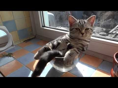 Cat Relaxing In A Glass Bowl Cats Kittens Cats And Kittens