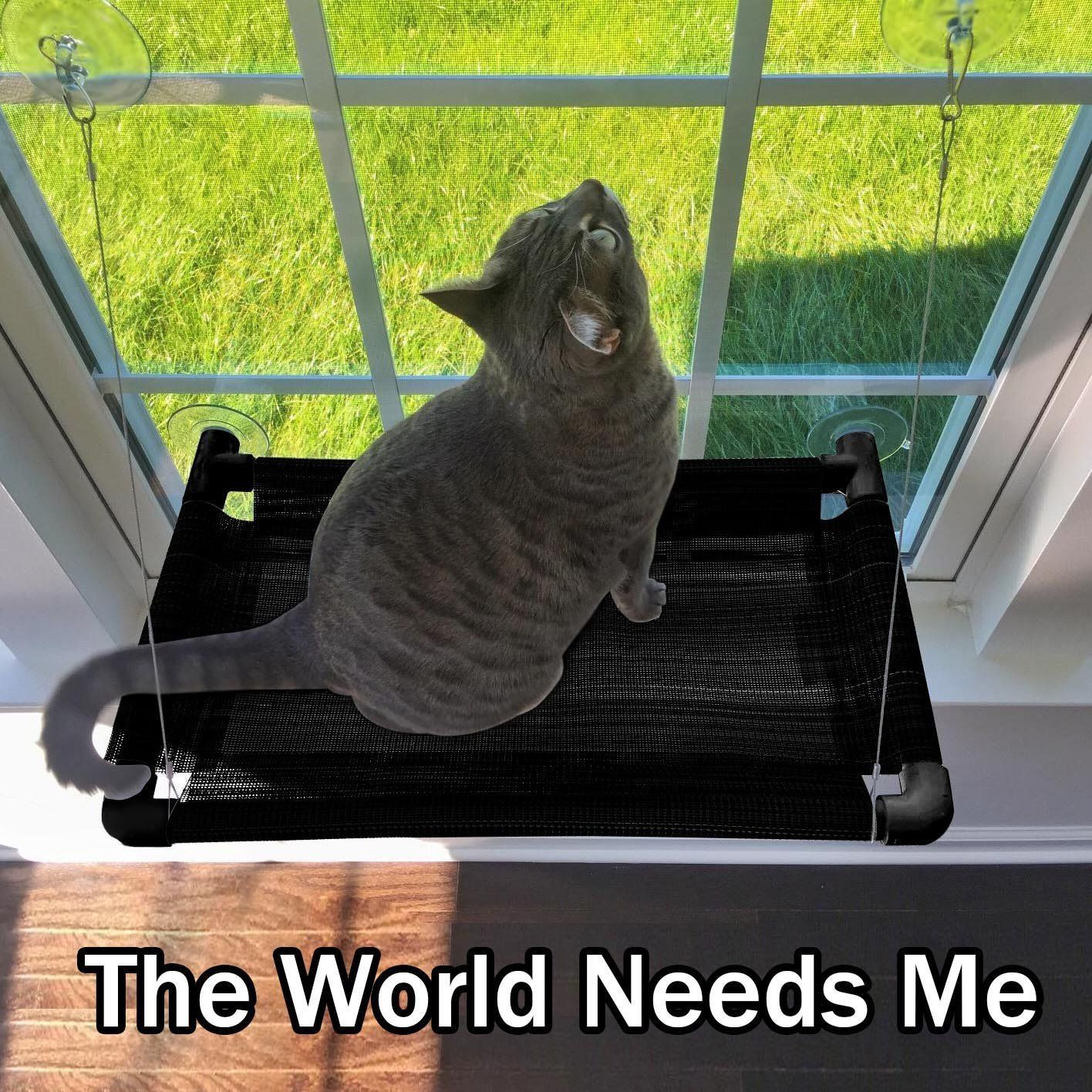 cat    cat window perch   sturdy cat window hammock w  strong suction cup     cat window perch   sturdy cat window hammock w  strong suction cup      rh   pinterest
