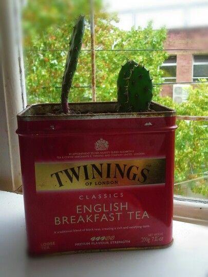 Cactus # twinings