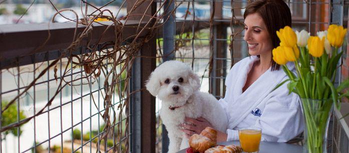 Pet Friendly Napa Valley Pet Friendly Hotels Dog Friendly Hotels Napa Valley Hotels
