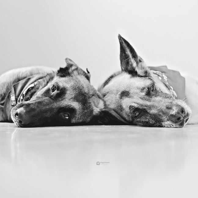 #dogsofinstagram on #instagram