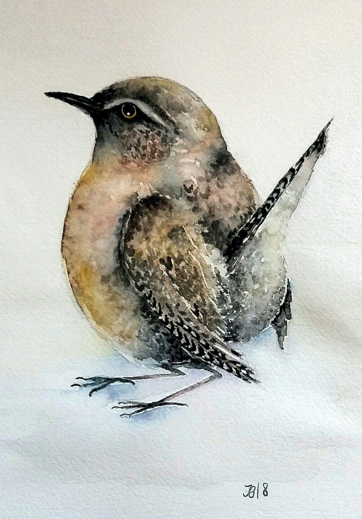 Aquarell Zaunkonig Watercolor Wren Aquarell Wasserfarben Vogel