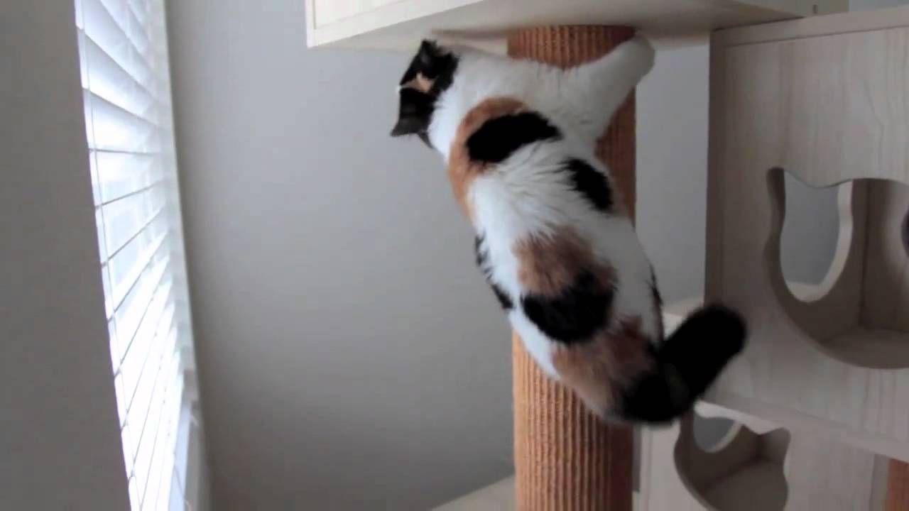 Energieee!!! pisicuta energica.