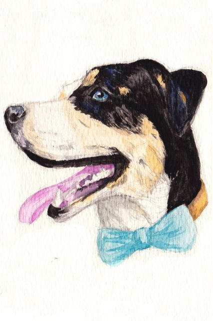 I am wearing my super special bow tie just for you! Would you like to go out with me? For a walk?