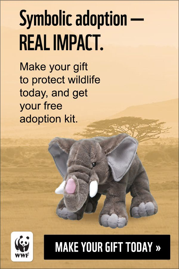 Make Your Gift To Protect Elephants In The Wild And Send A Stuffed