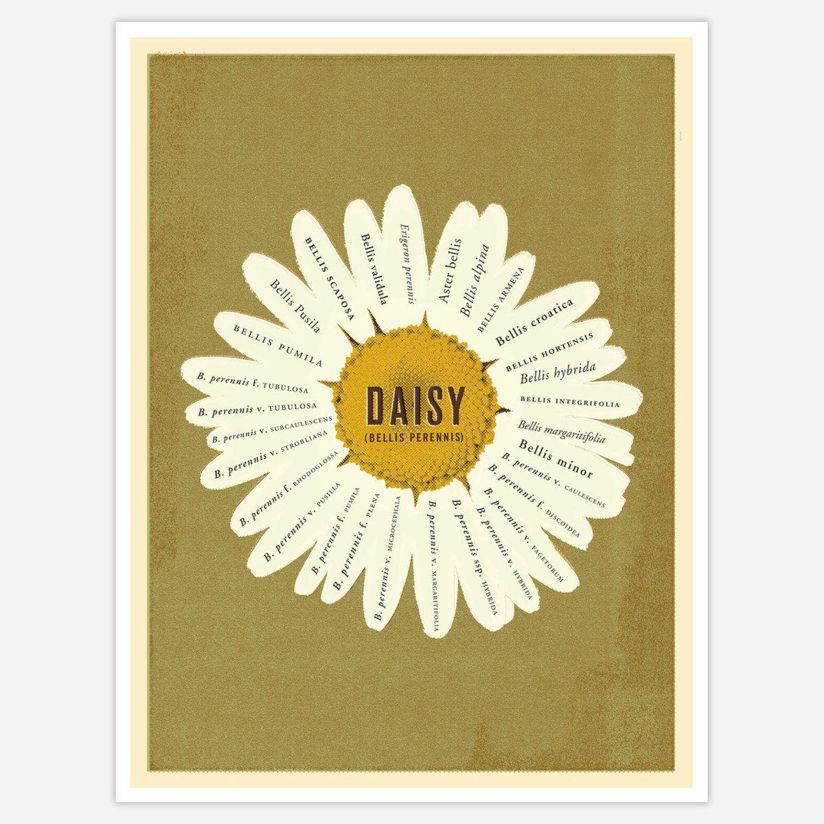 Serious daisy love.