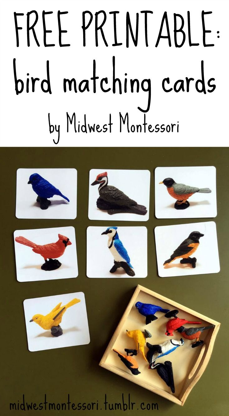 i made these matching cards for charlotte u0027s backyard birds toob