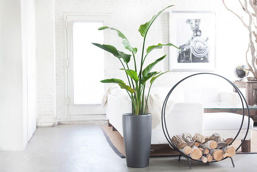 Idee per arredare il salotto con piante da interno for Arredamento da interni