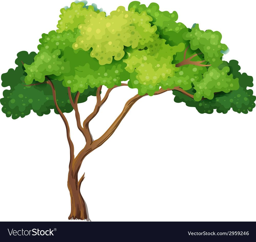 Tree Vector Image On Vectorstock Tree Drawing Tree Illustration Vector Trees Doodle tree with birds in leafy tree silhouette. pinterest