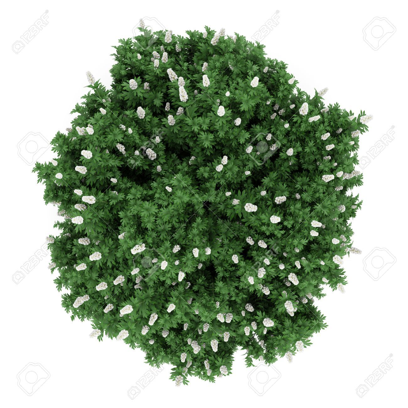 Shrub top view google search ref plant cutouts for Great small trees for landscaping