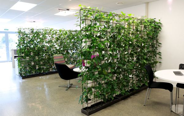 plants office spaces office screens office dividers forward cool