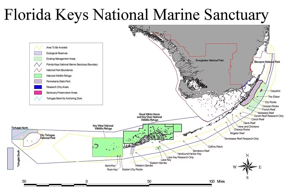 Diving And Snorkeling Pirates Cove Watersports Key Largo In 2020 Pirates Cove National Marine Sanctuary Key Largo Fl