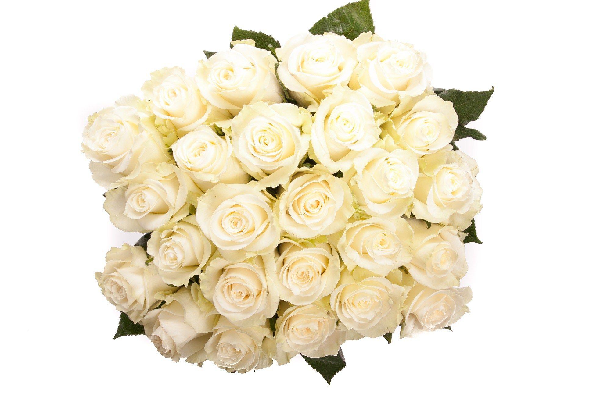 صور ورود بيضاء في غاية الروعة والجمال White Rose Bouquet White Roses Meaning White Roses