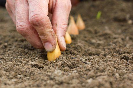 Что посеять и посадить в огороде в мае? | Севооборот ...